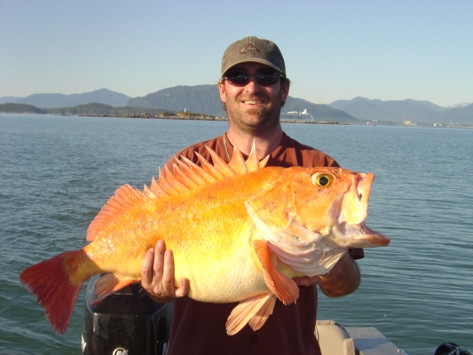 Red snapper for British columbia fishing license